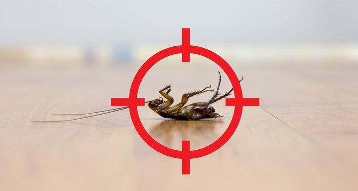 Environmentally Safe Pest Control Services