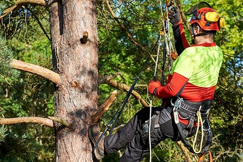 What is the Difference Between Tree Pruning and Tree Lopping?