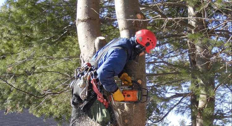 What Are The Benefits of Hiring Professional Tree Removal Company?