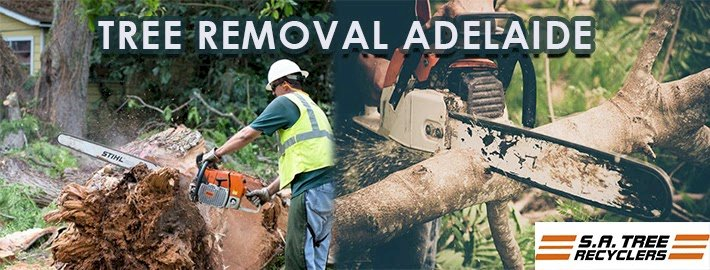 Benefits To Hire Professional For Stump Removal and Tree Removal Service
