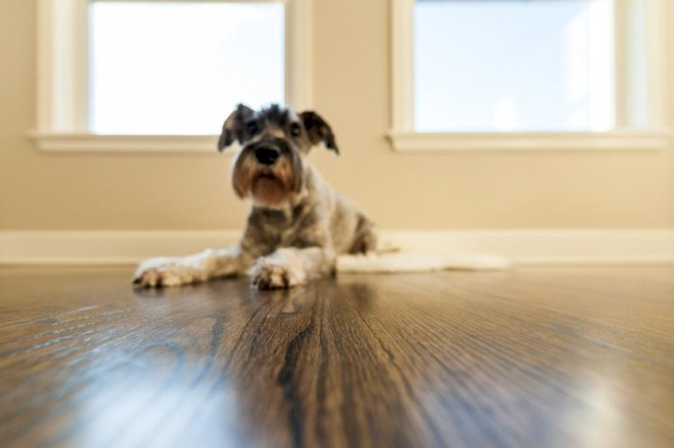 How to Choose the Perfect Flooring for Your Space