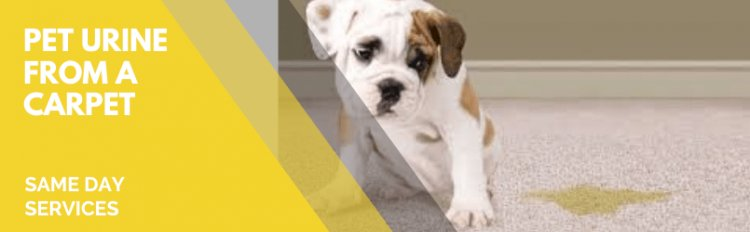 How Can You Clean A Pet Urine From A Carpet?