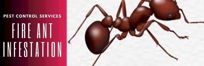 Getting Rid Of Fire Ants Easily – Natural & Effective Solutions!