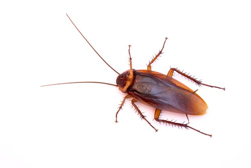 Top Cockroach Hiding Places